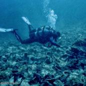 1er prix du Festival du film d'archéologie sous-marin de Port-Vendres 2018